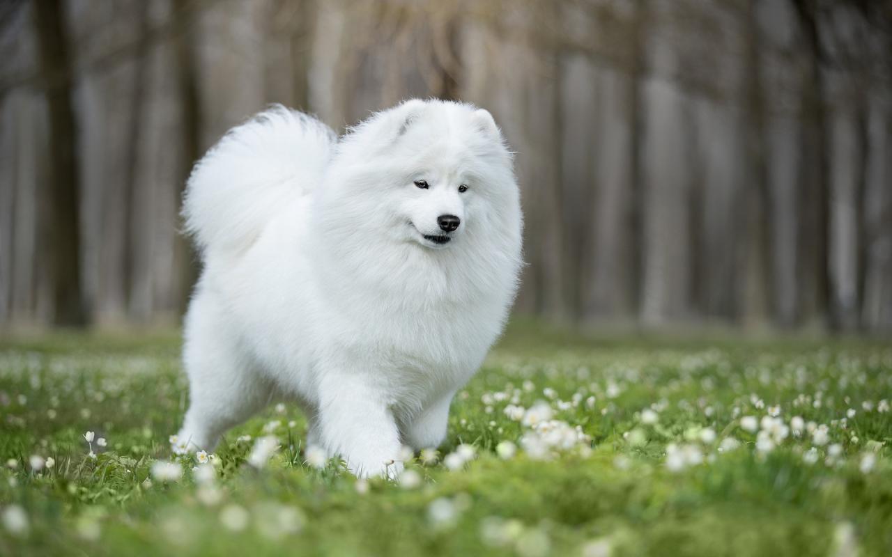 أدق 50 تفسير لحلم الكلب الأبيض فالمنام • موقع مصري