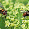 تفسير حلم الحشرات الطائره في المنام - مجلة رجيم