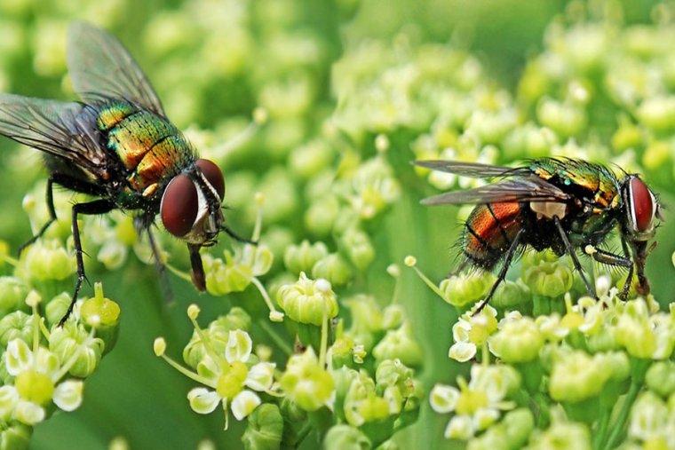 تفسير حلم الحشرات الطائرة فالمنام  مجلة رجيم