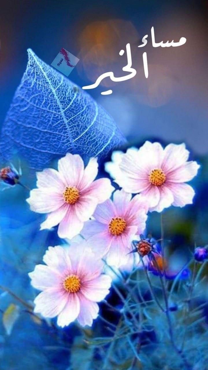 🌸#مساء_الخير 🌸 لجميلى المشاعر من يحتلون القلوب بصفاء نواياهم 🌸 مساء رقيق  لى و لكم احباب … | Good evening greetings, <p></p><br>Good morning arabic, <p></p><br>Good morning  greetings